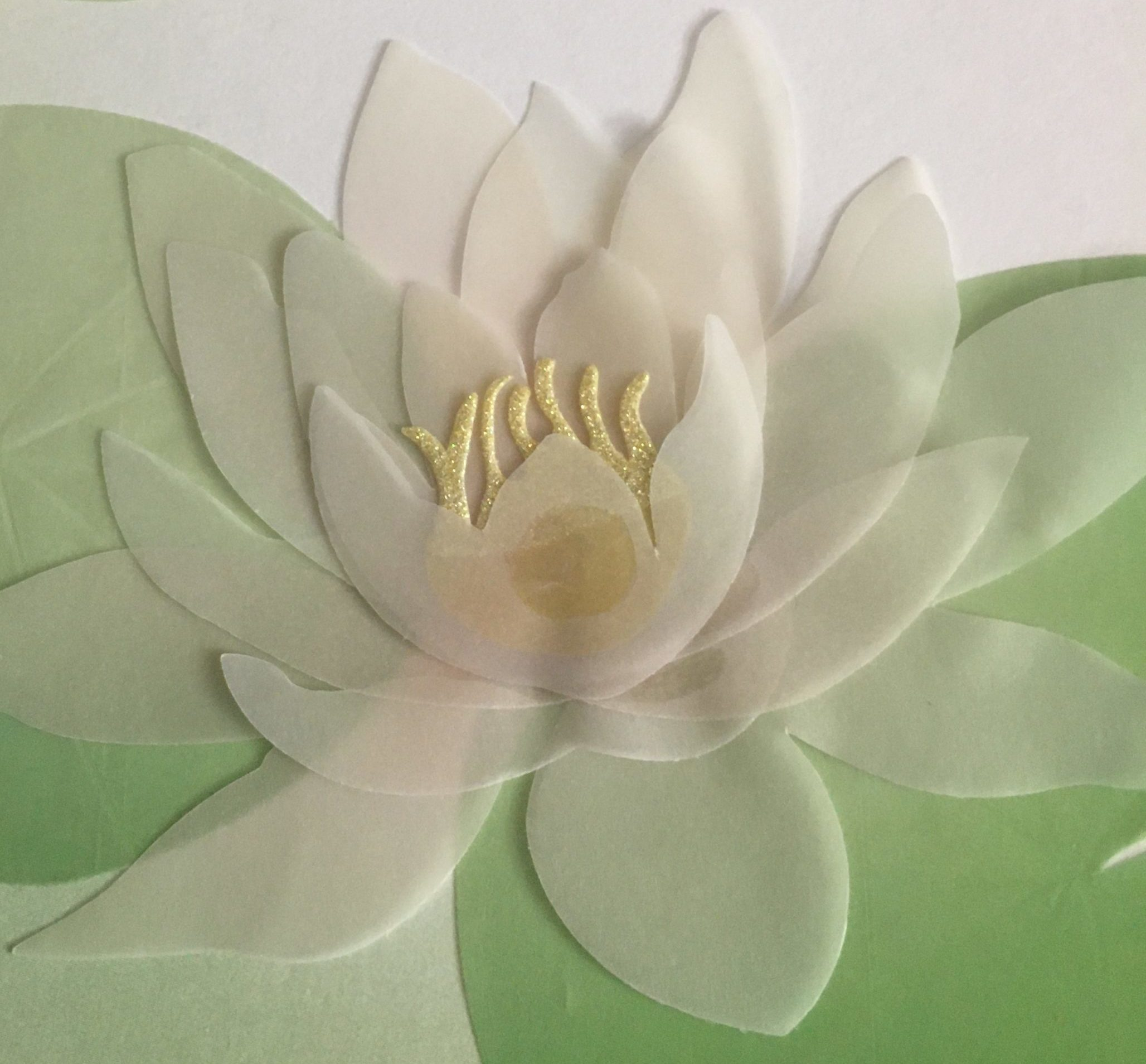 A Lotus Blooming